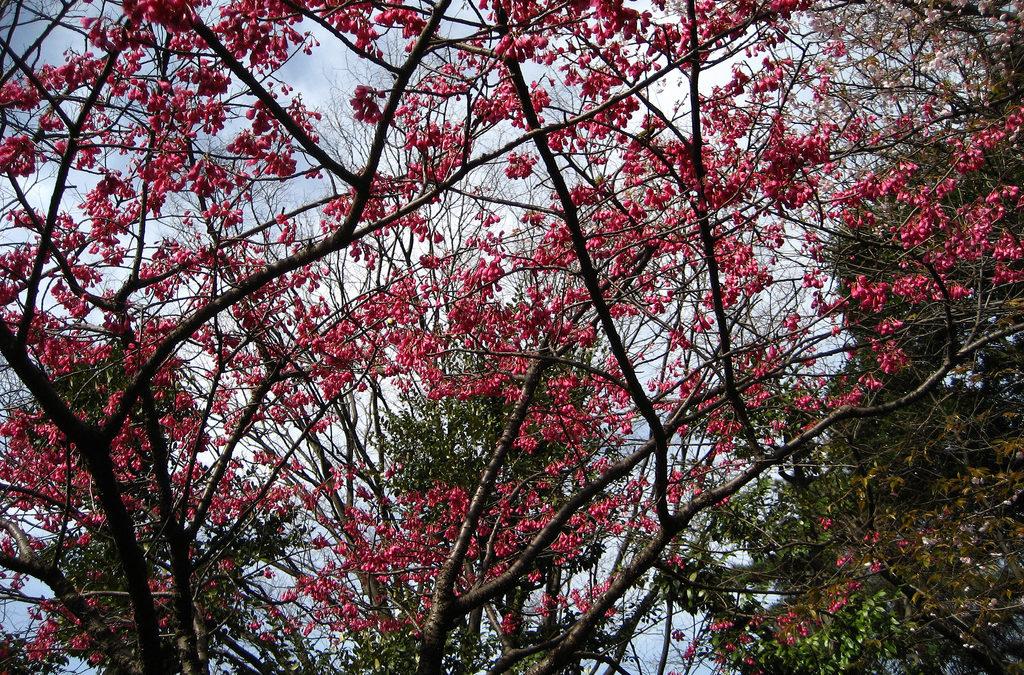 Japan : Inokashira Park