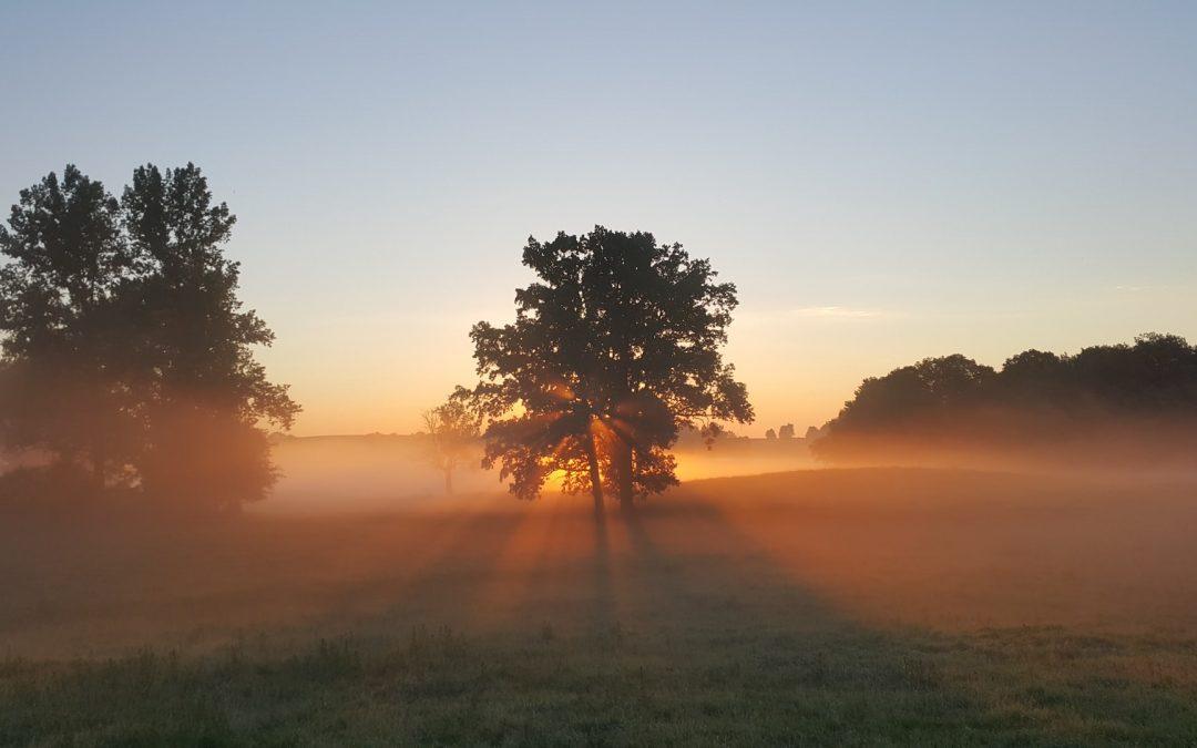 Early Morning Birdsong – 3rd May 2020 05:30